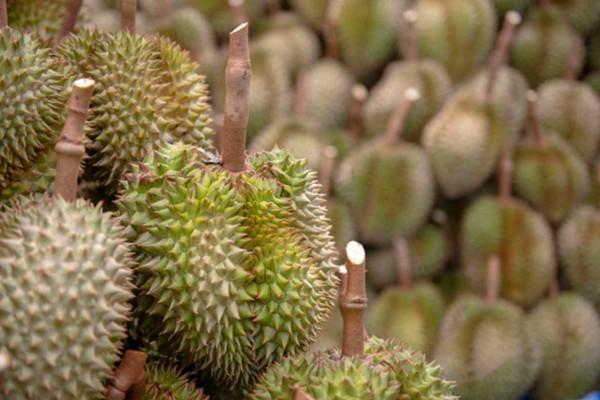 Fresh Thai Durian