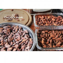 Cocoa Beans from Farm in Thailand