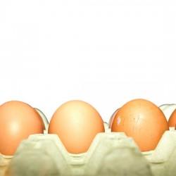 Quality Eggs from Quality GAP Farm Thailand