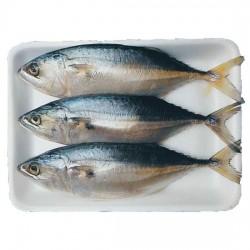 Grade A Mackerel Fish