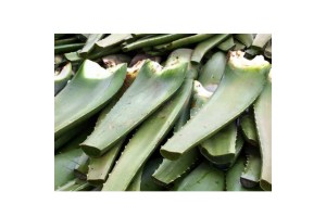 Fresh Cut Aloe Vera, Pesticide Free