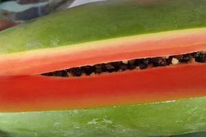 Holland Papaya From Thai Farmer