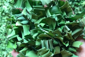 Dried Pandan Leaves,  Quality Grade from Thailand